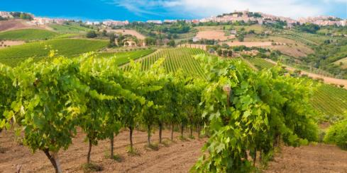 Visit the famed vineyards of France