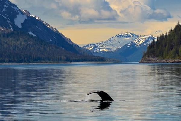 Calm waters disturbed only by the flick of a whale's tail