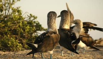 See Blue-footed boobies and other wildlife on your Galapagos tour