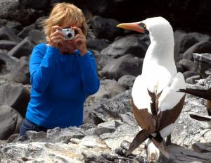 Photographing a Masked Booby in the Galapagos