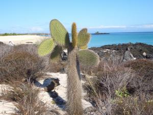 Sole cactus on the beach