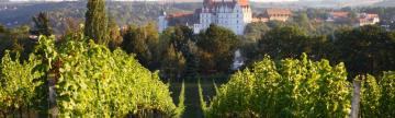 Visit vineyards in eastern Germany