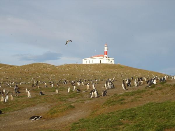 Disembark at Magdalena Penguin Colony