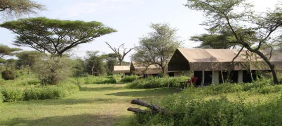 Experience the Great Migration from Camp Zebra