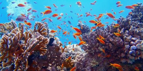 Explore the wonder of coral reefs