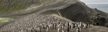 Visiting a chinstrap penguin colony on Deception Island