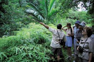 Taking a jungle walk and looking for wildlife