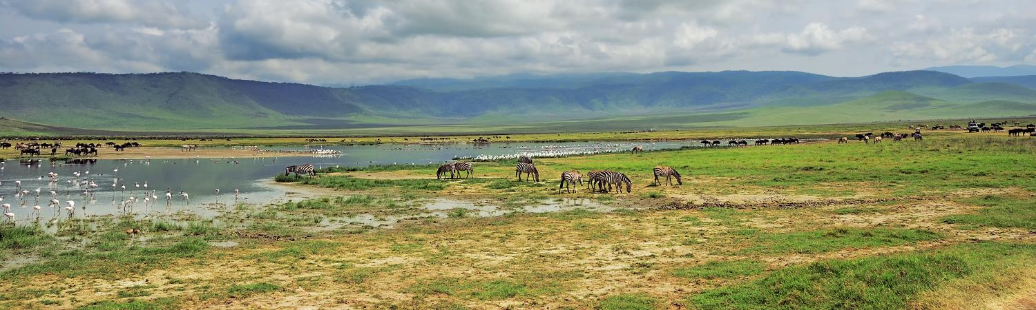 Marvel at the wildlife and landscape of the Ngorongoro Crater