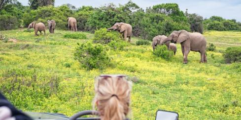 Look for elephants on a game drive