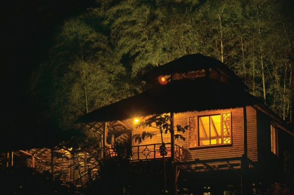 Enjoy an evening under the jungle sky