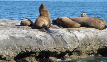 Sea lions, this is a view from the navigation