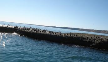 Cormorantes on a small island