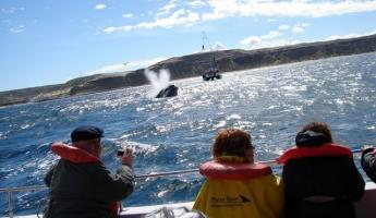 Whales watching navigation from Puerto Piramides