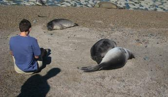 Sea Lions and sea elephants sleep in the beach