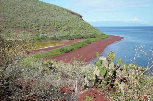 Rabida Island red sand beach in the Galapagos