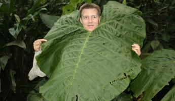 Man-sized leaf in Arenal Observatory Lodge garden