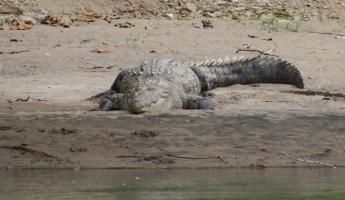 3.5m crocodile - seen from our inflatable raft!