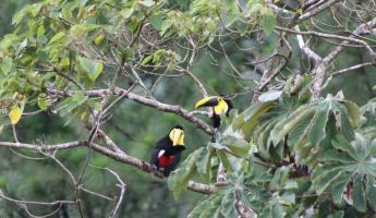 A Toucan or two at AOL