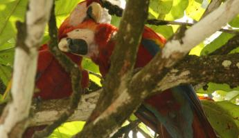 Macaws mate for life - great to see them on our honeymoon