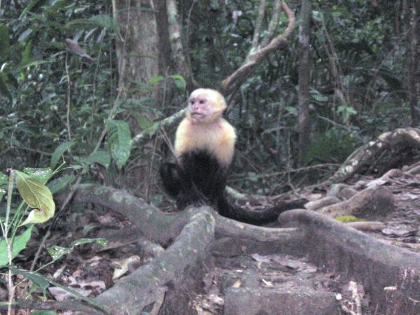 Posing for pics in Manuel Antonio Nat. Park