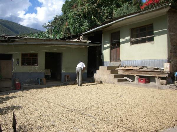 The drying of coffee beans.