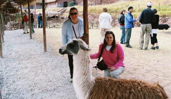 Exploring the area with an alpaca