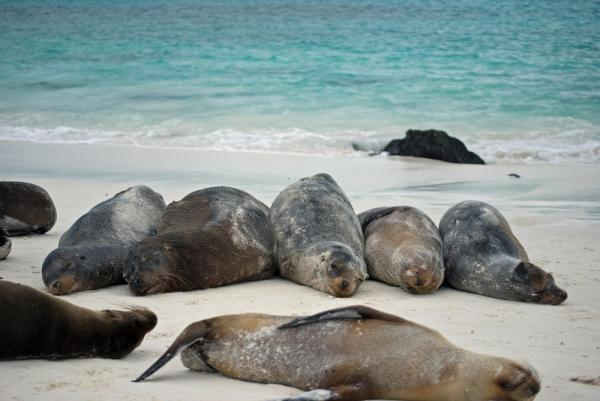 Exploring the Galapagos Islands aboard the Millenium