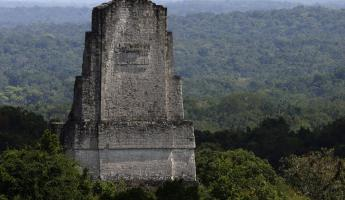 A Tikal Tower appearing above the jungle canopy