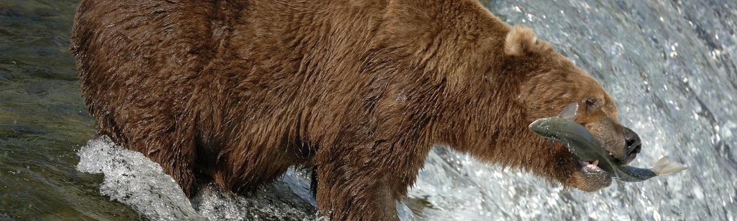 Alaska cruise and wildlife viewing tours