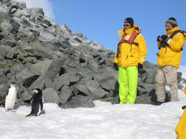 Curious penguins and travelers on an Antarctic tour
