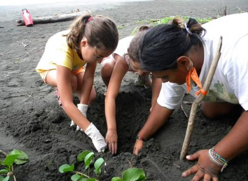 Digging for baby sea turtles at the Pacuare Nature Preserve