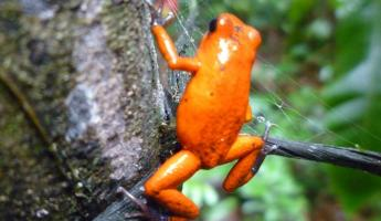 Day 6:  bright orage frog on the way to waterfall