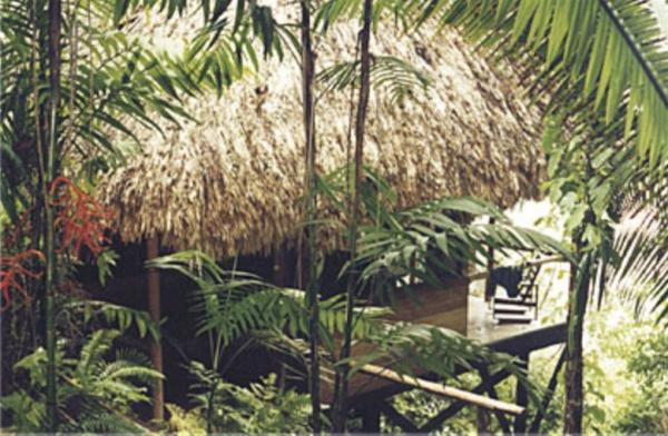 View the lush jungle from the porch of your bungalow