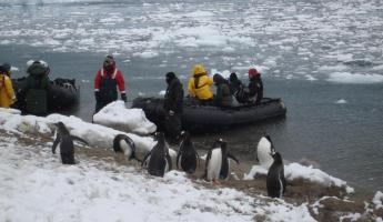 The penguins wait their turn for a Zodiac ride