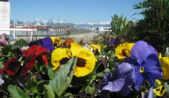 Ushuaia in the spring