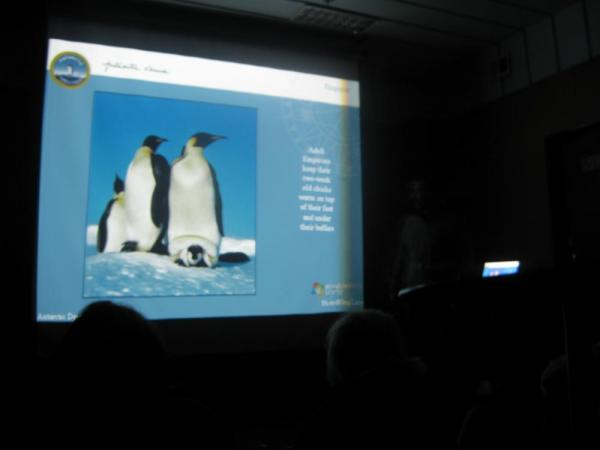 A lecture on penguins...very informative