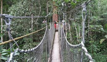 Suspension bridge in the jungle
