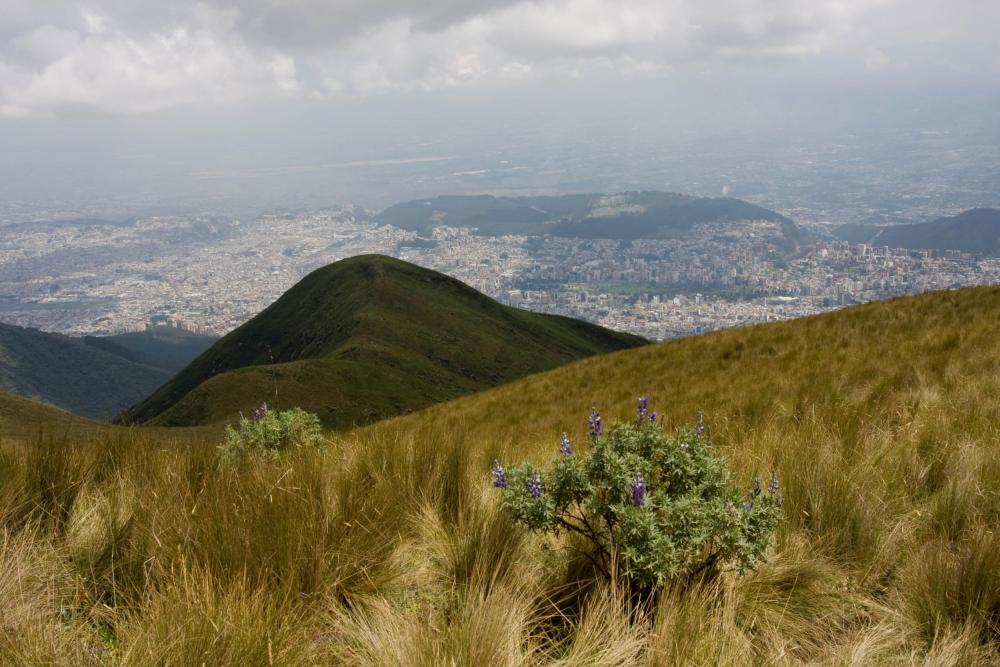 (Quito) View from Cruz Loma, Pichincha Volcano
