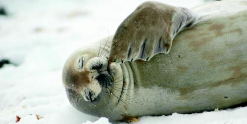 A young seal rests on the shore