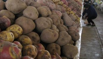 the 900 different species of potatoes in Peru