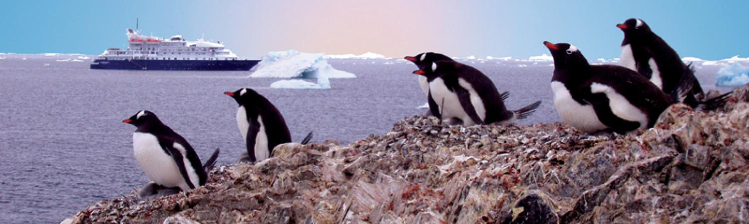 Gentoo penguins greeting the Corinthian II