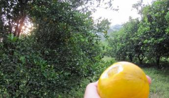 Orange trees and plantations abound - Joe couldn\'t resist!