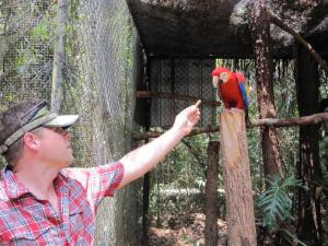 Making friends with a macaw at the Belize Zoo
