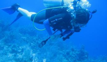 Watching beautiful coral reef pass by while diving off Caye Caulker