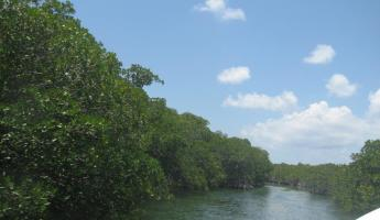 Cruising through the mangroves on the way home from diving