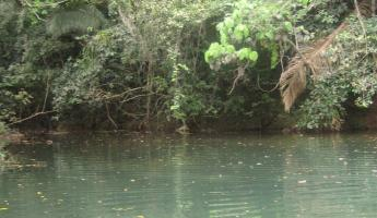 One of the beautiful swimming holes at Pook\'s