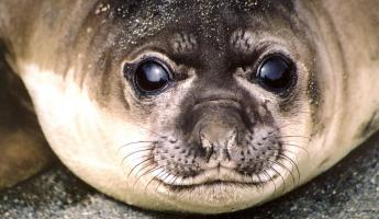 Up-close with a seal