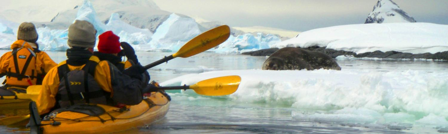Kayaking close to the seal