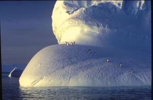 Penguin riding the iceberg
