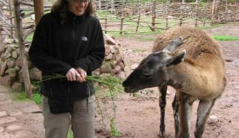 Carine feeds the vicuna